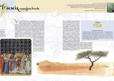 L'acacia, compagnon d'exode